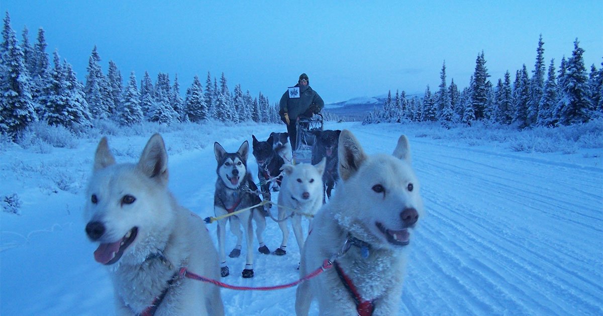 Iditarod Sled Dog Race: The Last Great Race on Earth